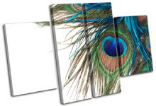 Peacock Feathers Animals - 13-0972(00B)-MP17-LO